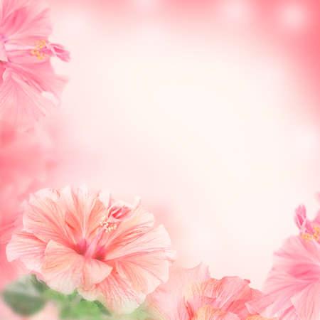 ibiscus: Cornice luminosa fatta di fiori di ibisco con spazio per il testo Archivio Fotografico