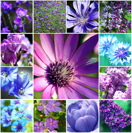 Beautiful nature collage photo