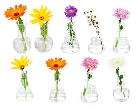 incubate: Collage of different flowers in glass test-tubes, isolated on white Stock Photo