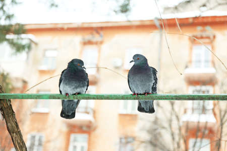 Two doves on crossbar on house and sky background photo