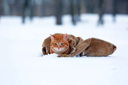 Cute red cat wrapped in blanket on snow background photo