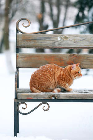 Red cat on bench in park on snowfall background photo
