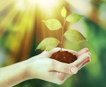 Plant in hands on sunny nature background photo