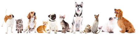 Cute pets isolated on white Archivio Fotografico