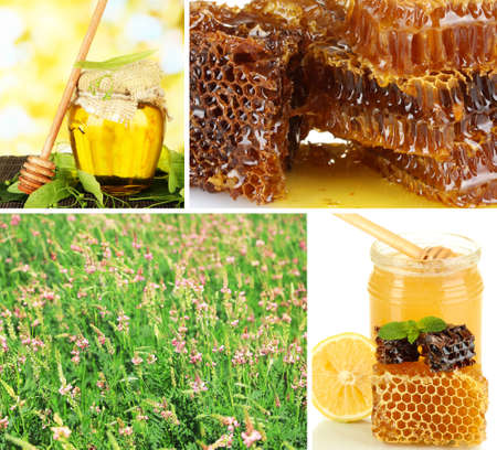 Beekeeping collage photo