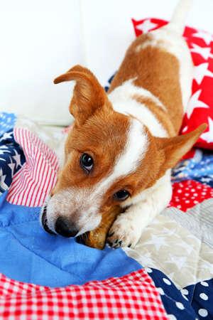 rawhide: Dog with rawhide bone on sofa