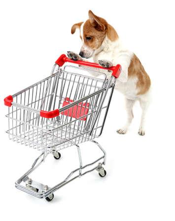 Hond met winkelwagentje geïsoleerd op wit Stockfoto