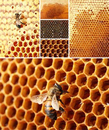 beekeeping: Beekeeping collage