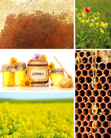 beekeeping: Beekeeping collage
