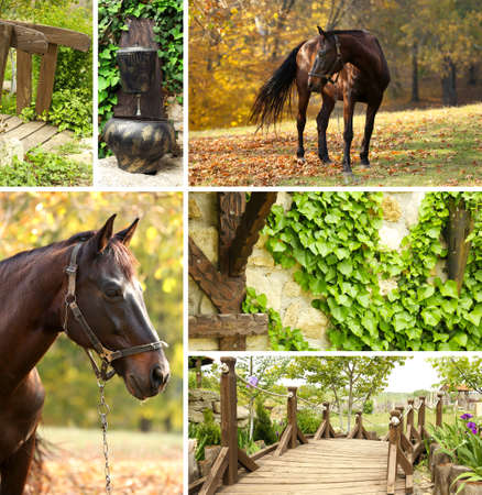 Countryside collage photo