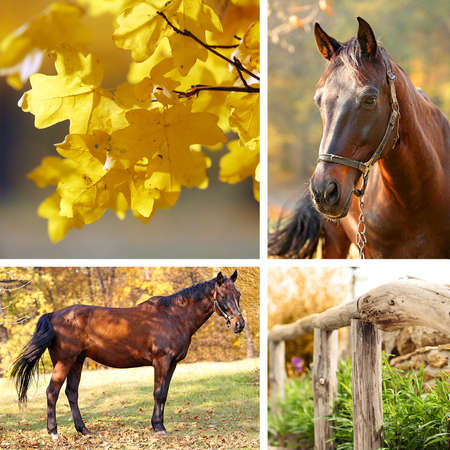 Collage of beautiful brown horse in pasture photo