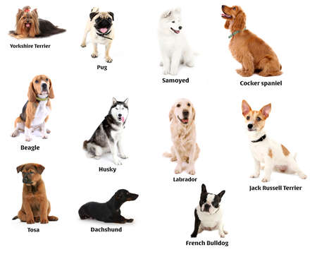 beagle puppy: Different breeds of dogs