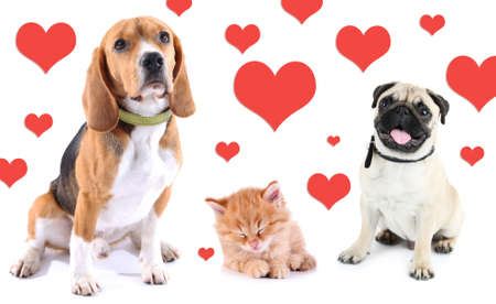 Cute pets on light background with hearts