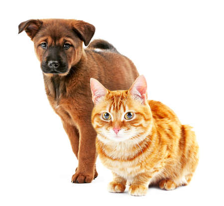 Cute pets isolated on white Stockfoto