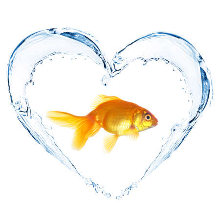 Goldfish in water splashes in shape of heart, isolated on white