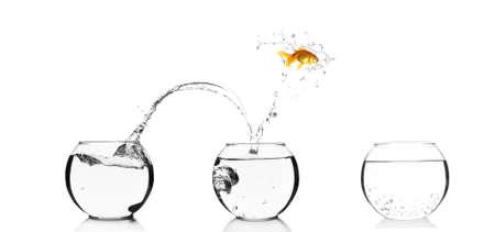 goldenfish: Goldfish jumping into glass aquarium, isolated on white