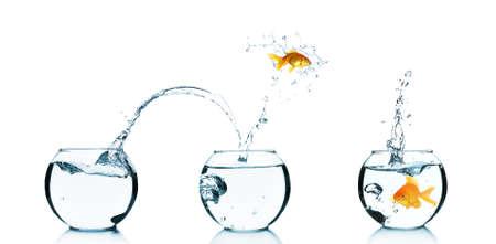 glass bowl: Goldfish jumping into glass aquarium, isolated on white
