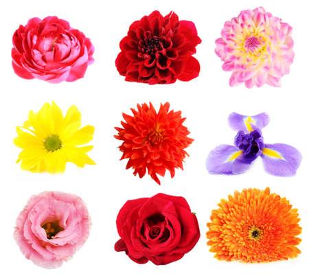 sch�ne blumen: Sch�ne Blumen Collage
