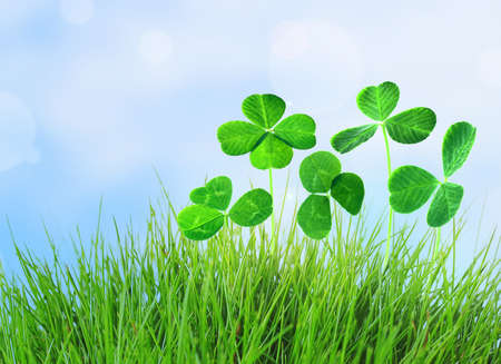 Clover leaves in grass on blue sky background photo