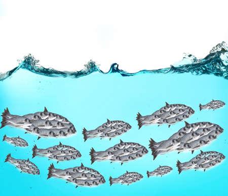 school fish: Fish school under water