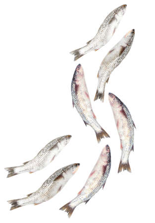 Many fishes isolated on white photo