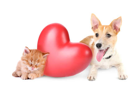 valentine cat: Cat and dog with red heart isolated on white