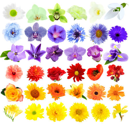 Beautiful flowers collage photo