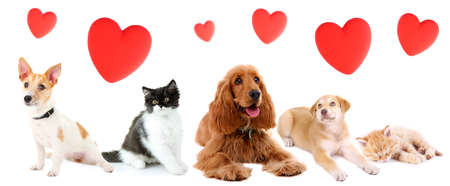 valentine cat: Cats and dogs with red hearts isolated on white Stock Photo