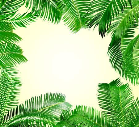 Frame of green palm leaves on light background Reklamní fotografie