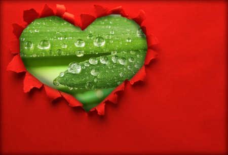 gotas de agua: Agujero de papel rasgado en forma de corazón con el fondo de hierba fresca en el interior