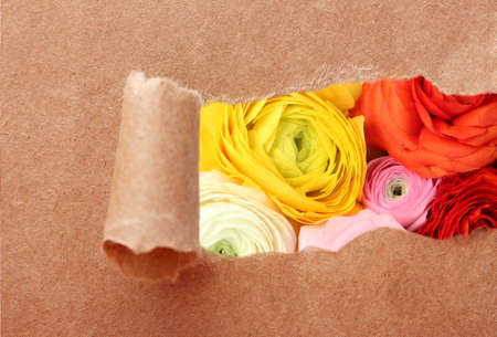 paper hole: Ripped paper hole with ranunculus background inside Stock Photo