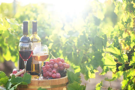 grapes: Tasty wine on wooden barrel on grape plantation background Stock Photo