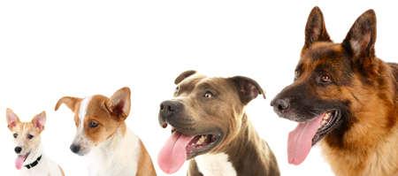 perros graciosos: Perros en fila aislados en blanco Foto de archivo
