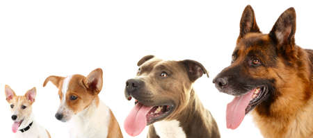 přátelský: Psi v řadě izolovaných na bílém Reklamní fotografie