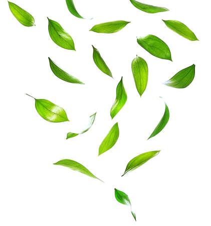 volar: Hojas verdes aisladas en blanco