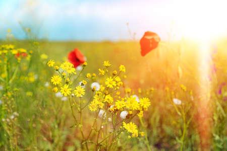 sch�ne blumen: Beautiful flowers in field