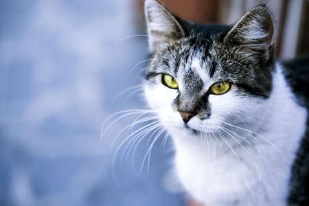 gray cat: Gray cat close-up, outdoors