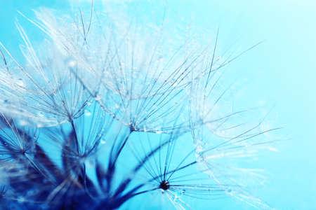 Beautiful dandelion with seeds, macro view photo