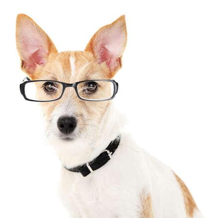 puppydog: Cute dog with eyeglasses isolated on white Stock Photo