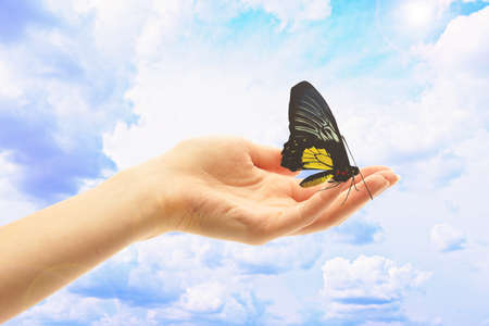 strong women: Human hand with butterfly on sky