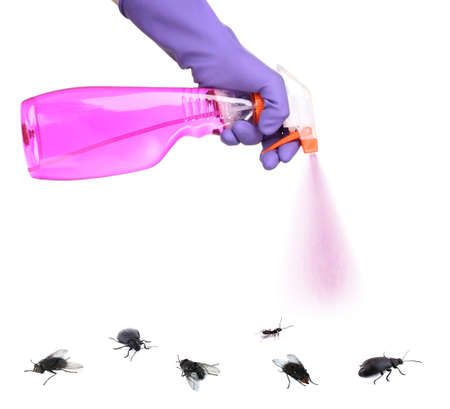 stinging: Plastic sprayer with insecticide and stinging insect isolated on white Stock Photo