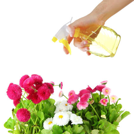 sprayer: Female hand with sprayer and flowers isolated on white Stock Photo