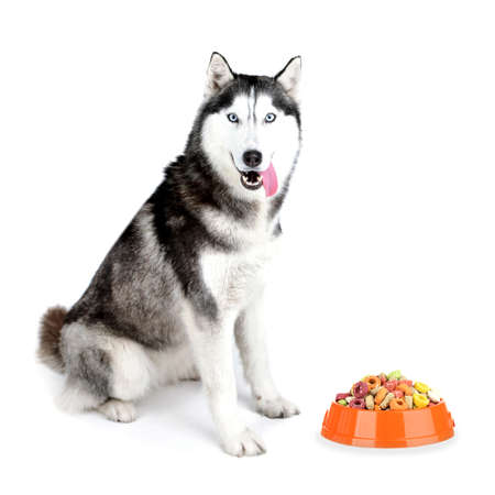 blue eye husky: Beautiful cute husky with food, isolated on white Stock Photo