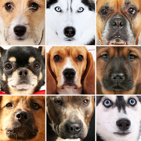 large dog: Collage of different dogs