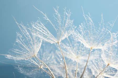 씨앗 아름다운 민들레, 매크로보기 스톡 콘텐츠