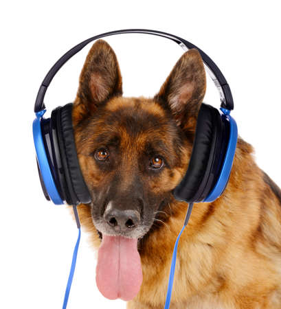 scamper: Cute dog with headphones isolated on white