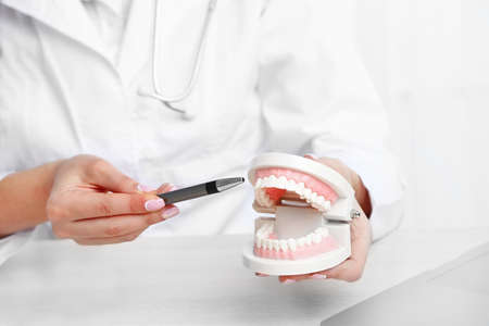 Young female dentist showing model of human teeth in her workplace, closeup