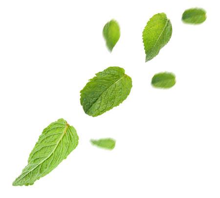 민트 잎 화이트 절연 스톡 콘텐츠