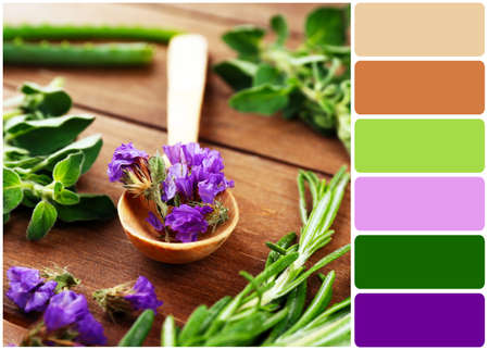 color palette: Green herbs and leaves on wooden table and palette of colors