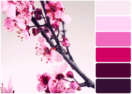 flowering: Beautiful flowering branch and palette of colors Stock Photo